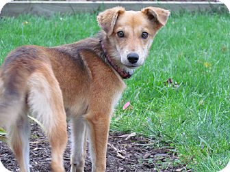 Terrier (Unknown Type, Small) Mix Dog for adoption in Hastings, New York - Maggie