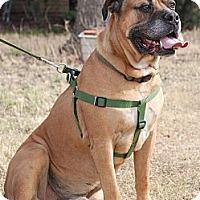Adopt A Pet :: Dyson - Phoenix, AZ