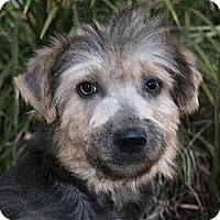 Adopt A Pet :: Patty - North Palm Beach, FL