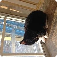 Adopt A Pet :: Spot - Aiken, SC