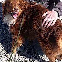Adopt A Pet :: Travis - Washington, IL