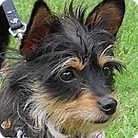 Adopt A Pet :: T-Bone - Kingwood, TX