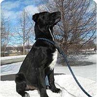 Adopt A Pet :: Hershey - Rigaud, QC