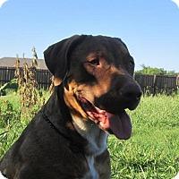 Adopt A Pet :: Moxie - Copperas Cove, TX