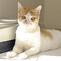 Adopt A Pet :: Oliver Stone - Santa Monica, CA