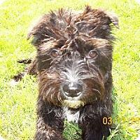 Adopt A Pet :: S Rags - Lafayette, LA