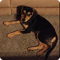 Adopt A Pet :: Geronimo - Frederick, MD