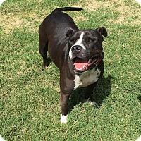 Adopt A Pet :: Zola - Longview, TX