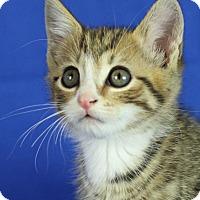 Adopt A Pet :: Luigi - Winston-Salem, NC