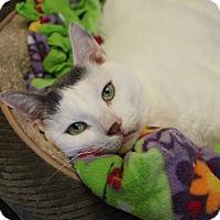 Adopt A Pet :: Hugo - Naperville, IL