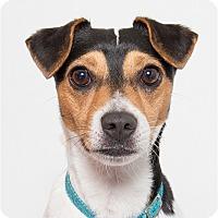 Adopt A Pet :: Jetter - San Luis Obispo, CA