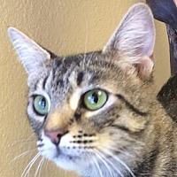 Adopt A Pet :: Renee - Auburn, CA
