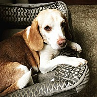 Adopt A Pet :: Bart - Freeport, ME