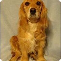 Adopt A Pet :: Holly - Sugarland, TX