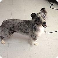 Adopt A Pet :: Peaches - apache junction, AZ