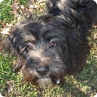 Adopt A Pet :: Gucci - Beachwood, OH
