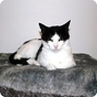 Adopt A Pet :: Catalina - Vancouver, BC