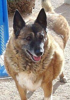 German Shepherd Dog Mix Dog for adoption in Las Vegas, Nevada - Liza