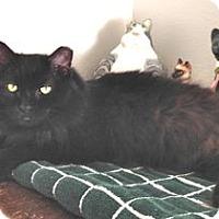 Adopt A Pet :: Glenda - Colorado Springs, CO