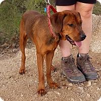 Adopt A Pet :: RUFUS - Higley, AZ