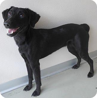 Feist Mix Dog for adoption in Manning, South Carolina - Jessie