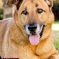 Adopt A Pet :: *URGENT ROCKY* - Van Nuys, CA