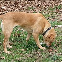 Mixed Breed (Medium) Mix Dog for adoption in Staunton, Virginia - ivory