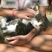 Adopt A Pet :: Nala - West Palm Beach, FL