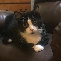 Adopt A Pet :: Melvin - Slidell, LA