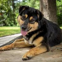 Adopt A Pet :: Lonnie - Alabaster, AL