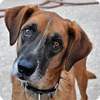 Adopt A Pet :: Slaney - Kansas City, MO
