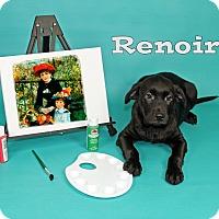 Adopt A Pet :: Renoir - Joliet, IL