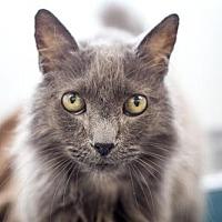 Adopt A Pet :: Theo - 27870 - Petaluma, CA