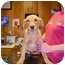 Photo 2 - Golden Retriever/Labrador Retriever Mix Dog for adoption in Yorkville, Tennessee - Lester