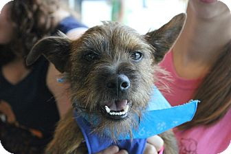 Schnauzer (Miniature) Mix Dog for adoption in Baton Rouge, Louisiana - Archie