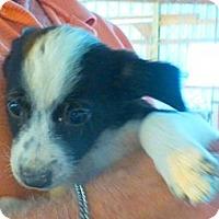 Adopt A Pet :: SASHA - Katy, TX