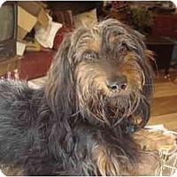 Adopt A Pet :: Jace Henry - San Jose, CA
