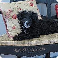 Adopt A Pet :: **TYSON** - Stockton, CA