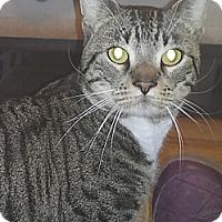 Adopt A Pet :: Bocchi - Germansville, PA