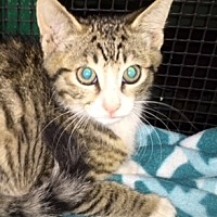 Adopt A Pet :: Swayze - Porter, TX