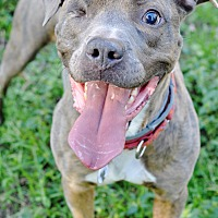 Adopt A Pet :: Gideon - College Station, TX