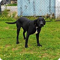 Adopt A Pet :: Rickey-042528k - Tupelo, MS