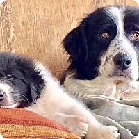 Adopt A Pet :: Daisy - Claremont, NC