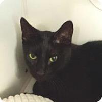 Adopt A Pet :: Shane - Reisterstown, MD