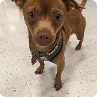 Adopt A Pet :: Tucker - Tracy, CA