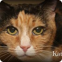 Adopt A Pet :: Katie - Springfield, PA