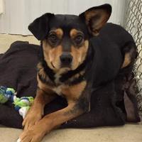 Adopt A Pet :: Dozer/Luigi - Athabasca, AB