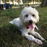 Adopt A Pet :: Jaxx - Encino, CA