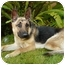 Photo 3 - German Shepherd Dog Dog for adoption in Los Angeles, California - Leila von Carson