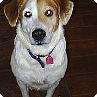 Adopt A Pet :: Spotty - cedar grove, IN